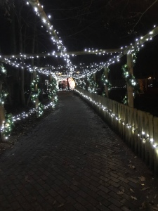A tunnel of twinkling lights leading the way. It is dark in the photo and the lights shine bright white.