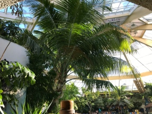 Looking up at the tropical plants and trees.