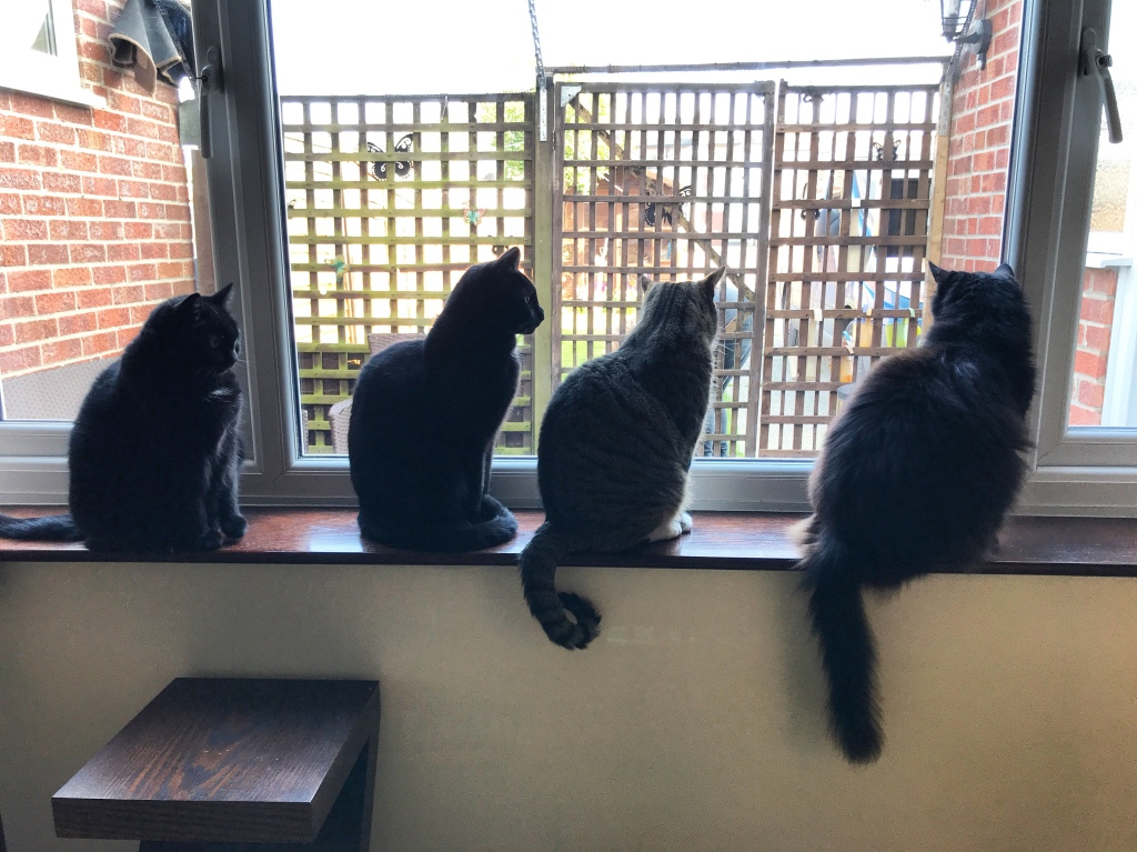 A photograph of my four cats sitting in a row on the windowsill. Through the window it is a sunny day.