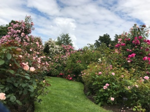 A smooth bright green grass pathway leads though the roses. Rose bushes in pinks are on either side