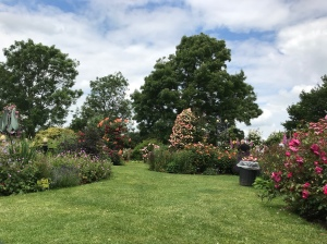 A wide open space of grass with various flower beds and roses going off into different areas