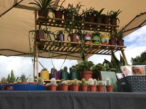A craft stall selling small cacti in various styles on pots.