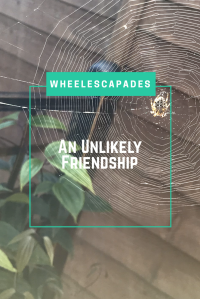 Looking through glass at a spiders web intricately spun. There is a spider in the top right corner. Leaves in the bottom left corner. Title text 'An Unlikely Friendship' is layered over the centre. An image to pin.