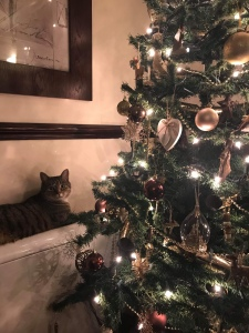 Christmas tree is on the right hand side. To the left is a radiator with a tabby cat laying on it beside the tree.