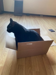 A black cat sitting in a cardboard box.