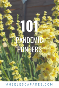An image to pin. Title text 101 Pandemic Ponders is places over a photo of tall yellow flowers.
