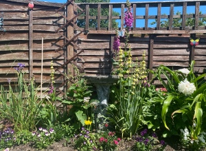 A photo of my garden. There is a stone bird bath with water fountain spraying up. It is surrounded by bright coloured flowers and plants at different heights. It backs on to a brown wooden fence, and bright blue sky can be seen just above.